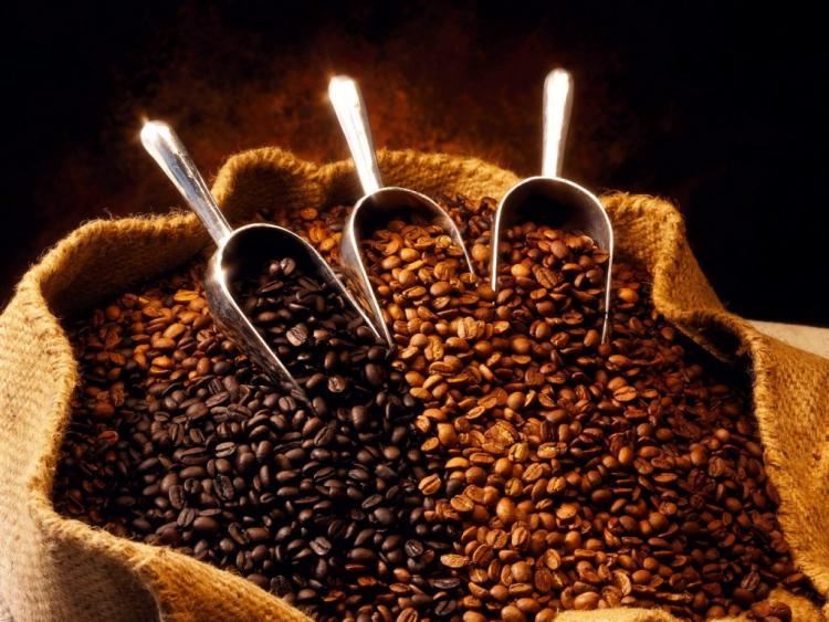 Как выращивают кофе
