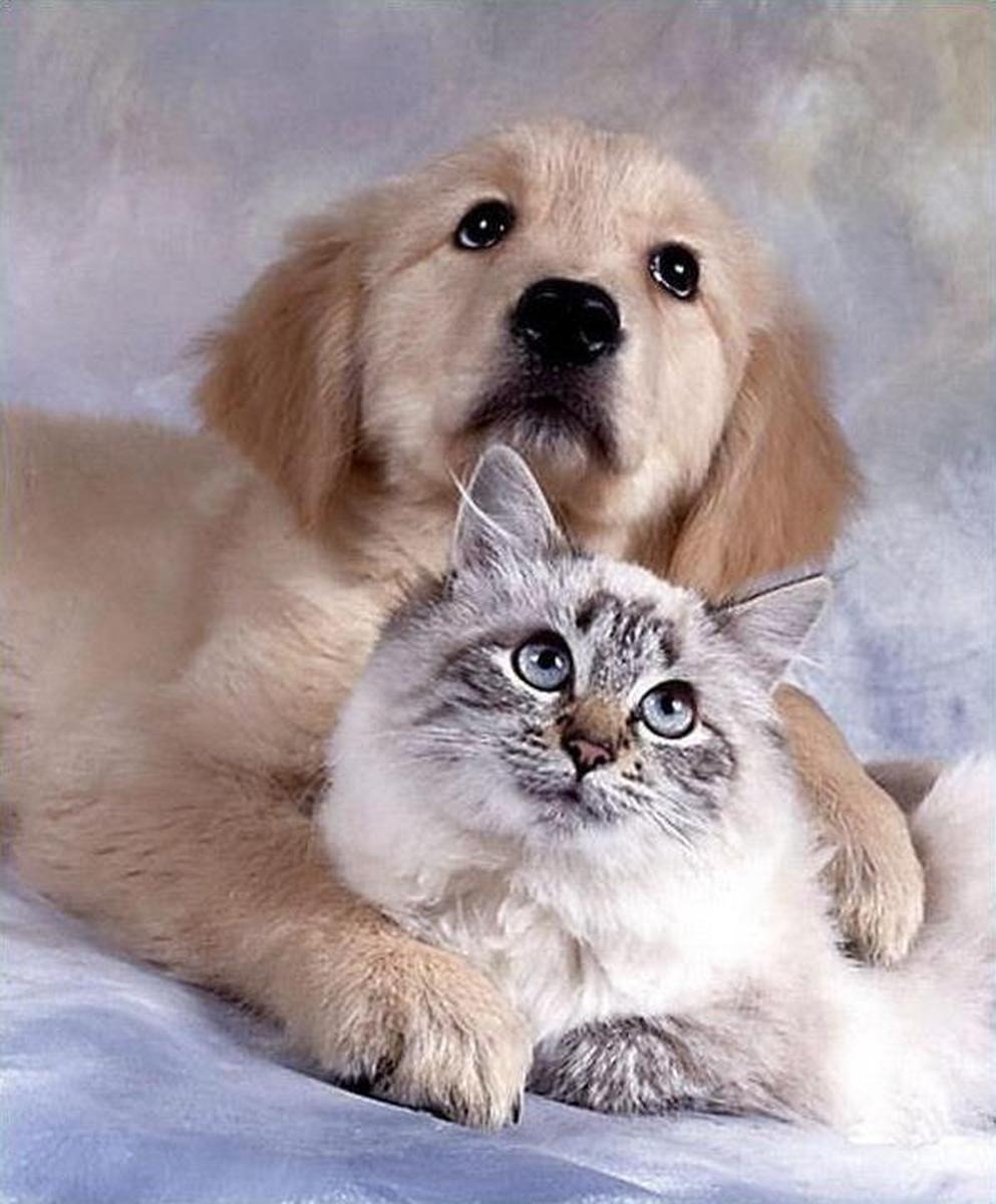 Правда ли, что когда умирает домашнее животное, то оно таким образом забирает смерть своего хозяина или кого-то из домашних?
