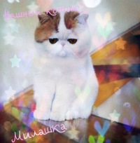 Знакменитый на весь интернет кот экзот  Снуппи  , кто же он на самом деле?