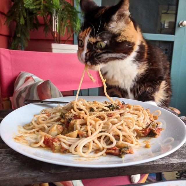 А кто устоял бы? Кошка соблазнилась вкусной пастой и из-за этого стала звездой!
