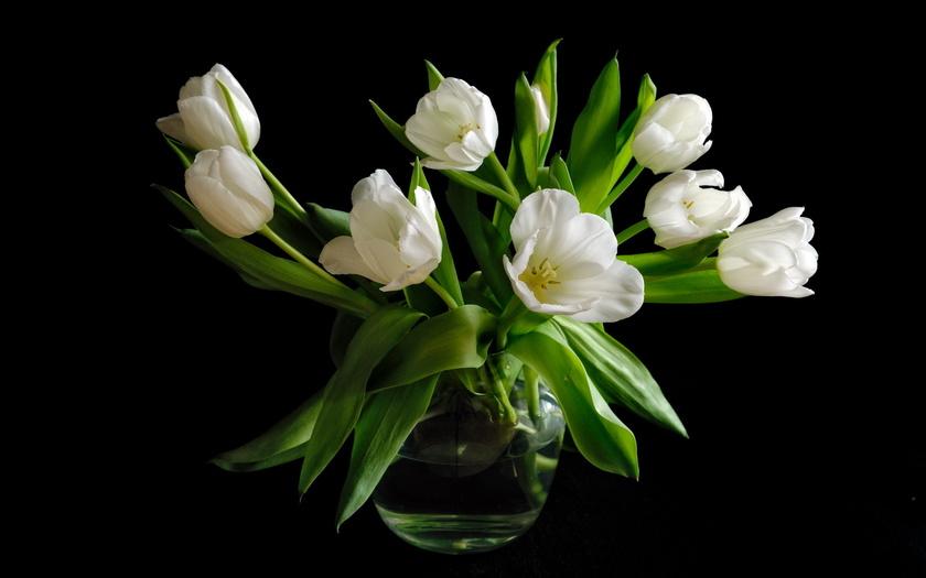 букет, черный фон, белые, тюльпаны