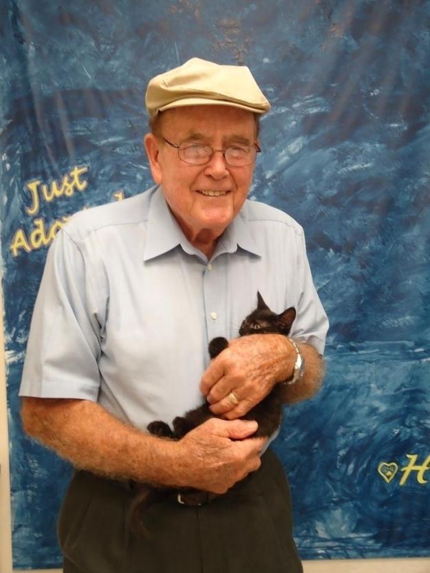 CatsGoldenHearts38 Почему мы любим кошек