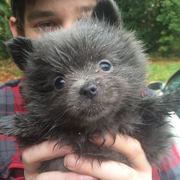 Он принес домой щеночка, но вот кто из него вырос!