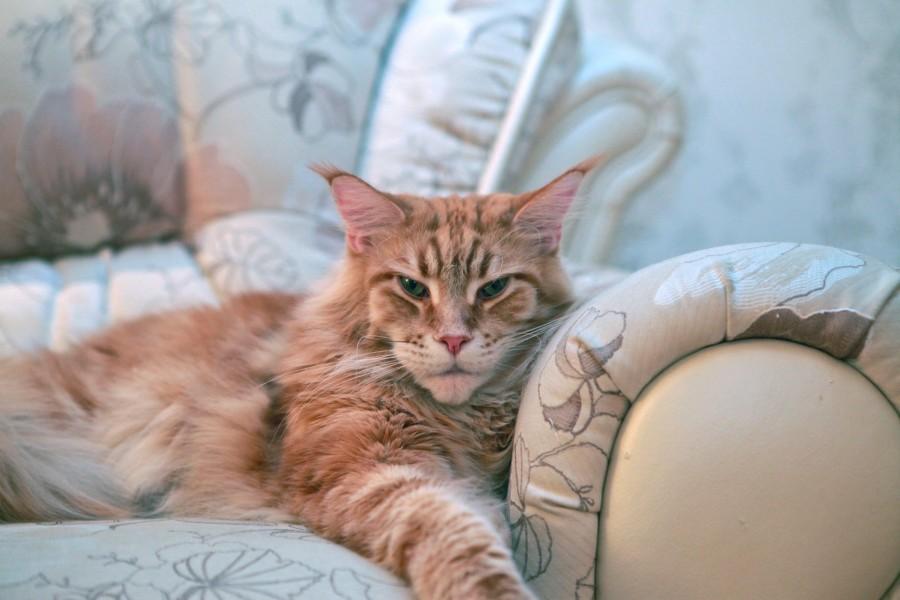 Каждую ночь вредный кот падал мне на голову и не давал спать...