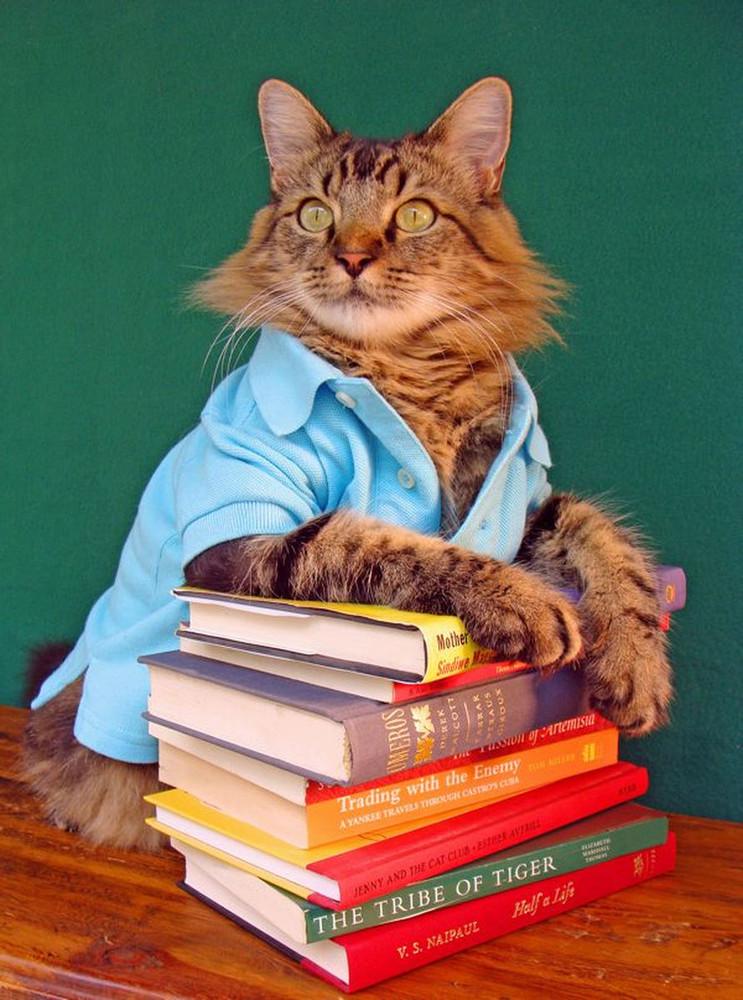 Кот-модель на фотографиях Джоан Бионди