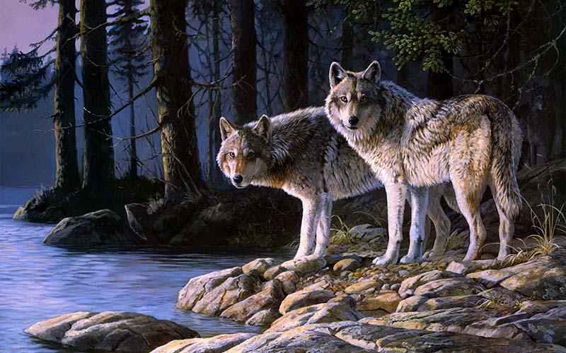 Кто сказал, что волк уже не …