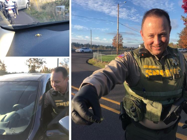 Когда из машины выскочила истошно вопящая дама, полицейские поняли: дело серьезное!