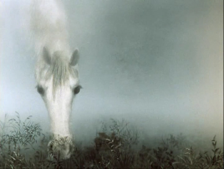 Белая лошадь... Улыбнемся