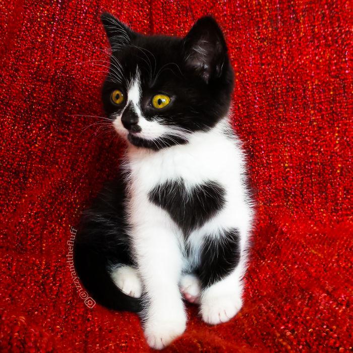Кошка с незабываемым окрасом – на её груди огромное сердце!