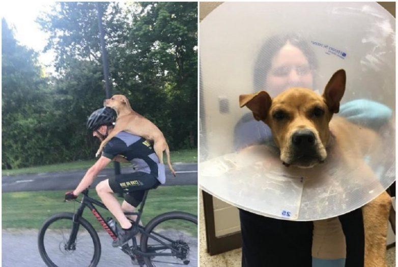 История спасения собаки