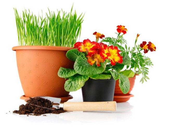 МИР РАСТЕНИЙ.Закон выращивания комнатных растений (8)