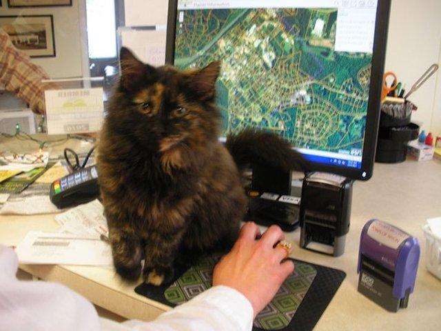 На один день этот котенок стал сотрудником полиции