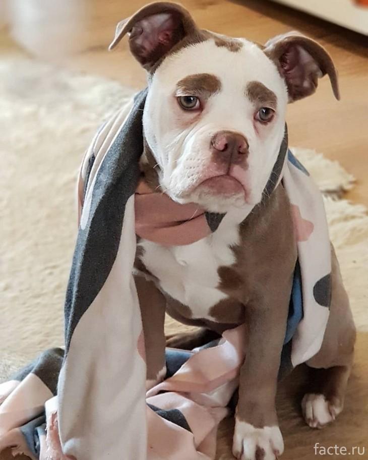 По морде этого пса видно, что он повидал всю печаль мира