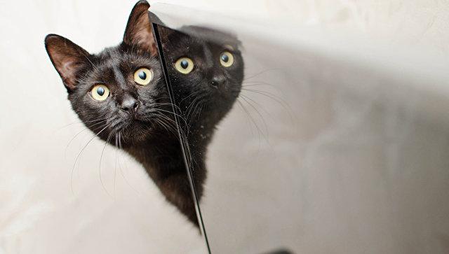 Милонов предложил законодательно запретить наказывать котов
