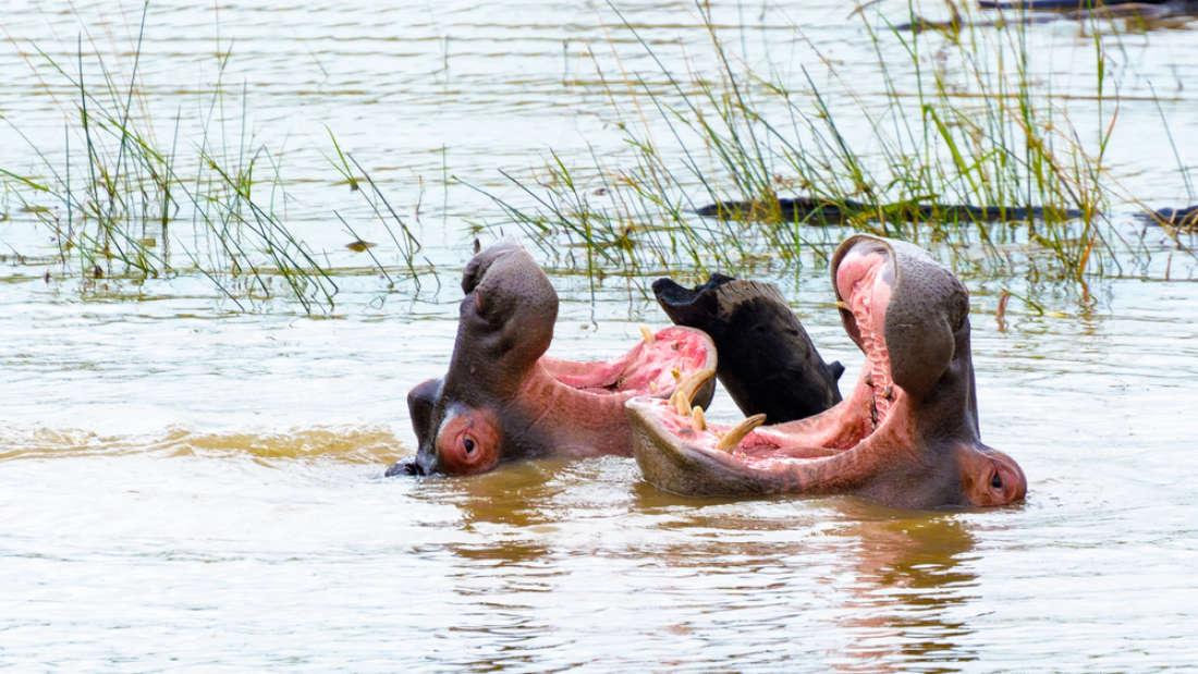 Животные тоже умеют вежливо …