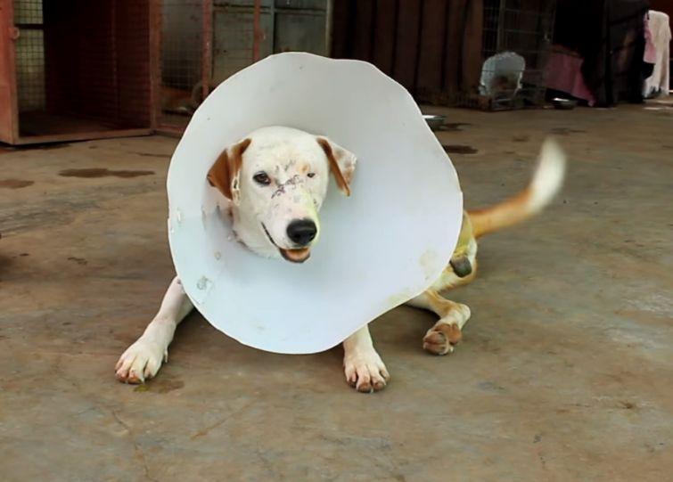 Искалеченная бродячая собака получила шанс на новую жизнь