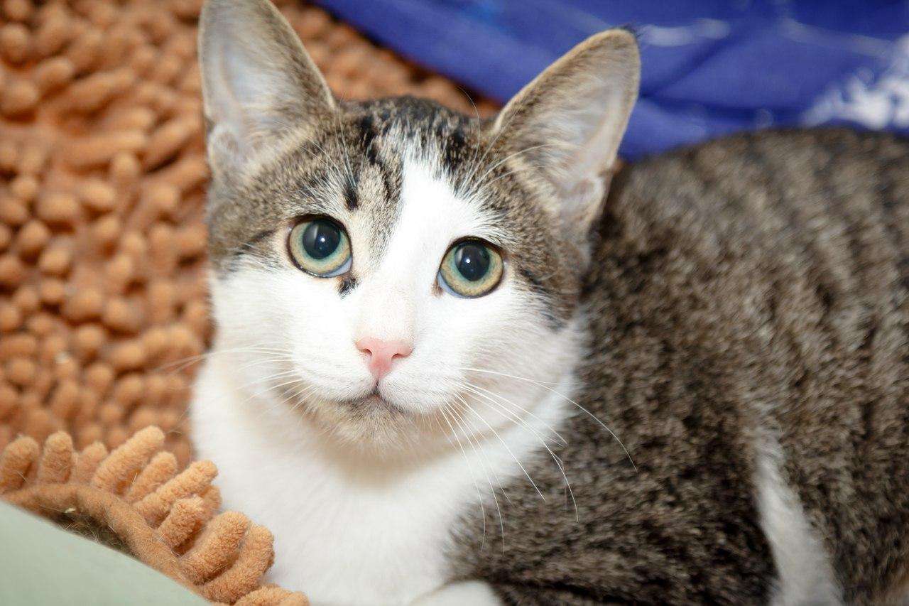 Масявочка - не кошка, а настоящий подарок!