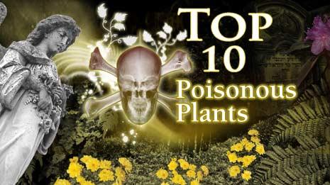 Топ-10 ядовитых цветов рядом с вами