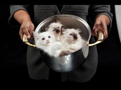 Суп с котом и пирожки с котятами. Ужасающие кулинарные традиции Китая.