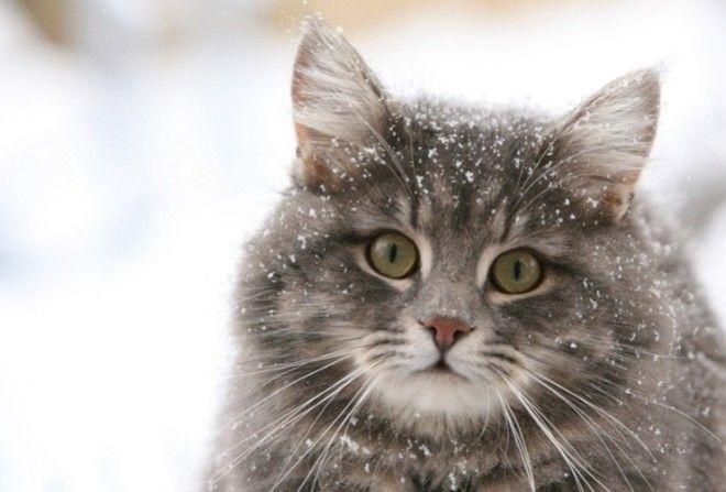 Кошка – превосходный конфликтолог.