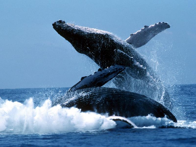 25 самых больших животных в мире