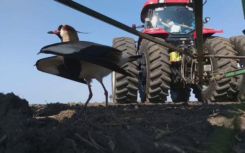 Птичку жалко! Фермер приподнял трактор ради спасения пернатой