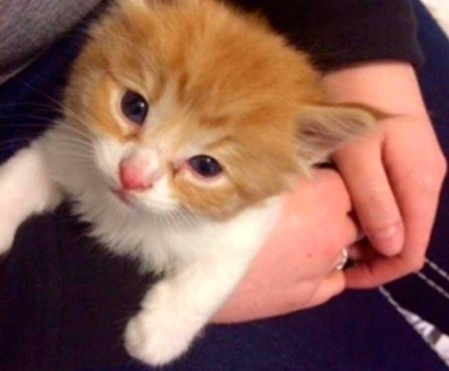 Уличный котенок увидел парня с домашним питомцем и решил, что будет жить с ними!