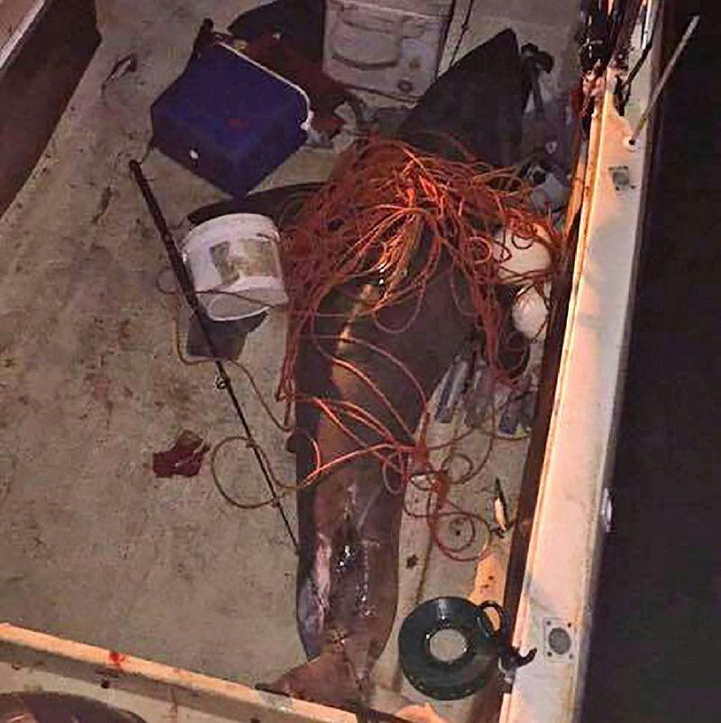 Акула запрыгнула в лодку к рыбаку