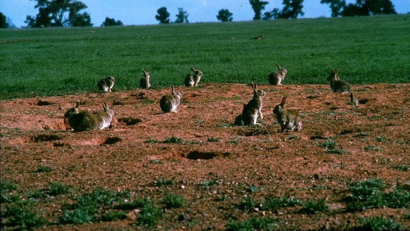 «Великие стены» Австралии австралия, забор, интересное