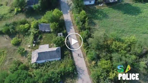 Кукурузный воришка спасается бегством от преследующего его дрона
