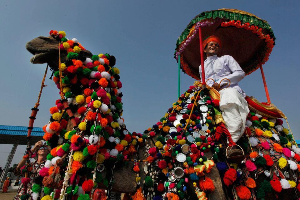 В Индии прошел конкурс мисс-2013 среди верблюдов
