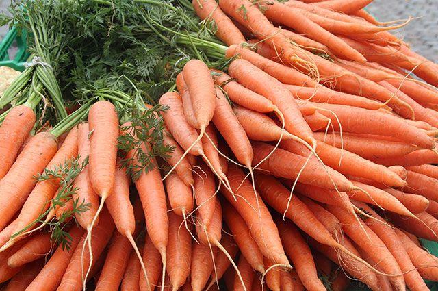 Оранжевое настроение: наступает время сбора урожая моркови