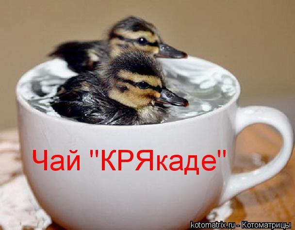 """Котоматрица: Чай """"КРЯкаде"""""""