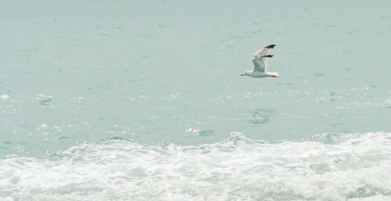Абхазия: побережье