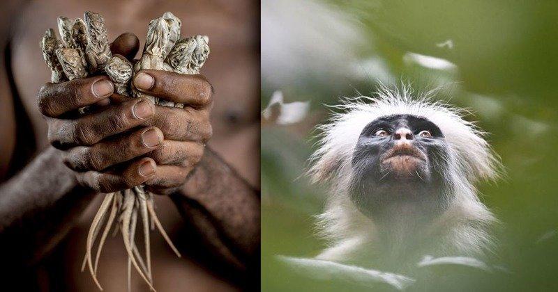 Фотографии, фиксирующие ускользающую красоту нашей планеты