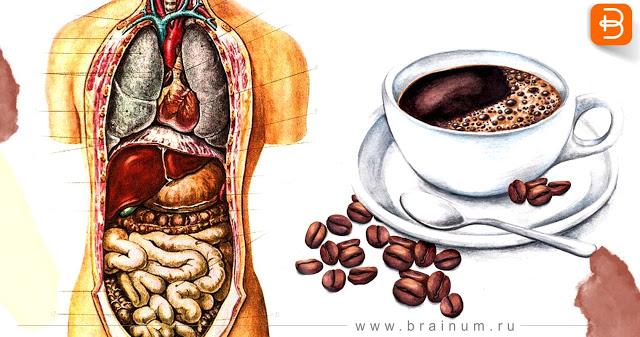 Вы пьете кофе по утрам на пустой желудок?