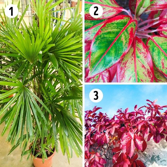 15 лучших растений для каждой комнаты в вашем доме