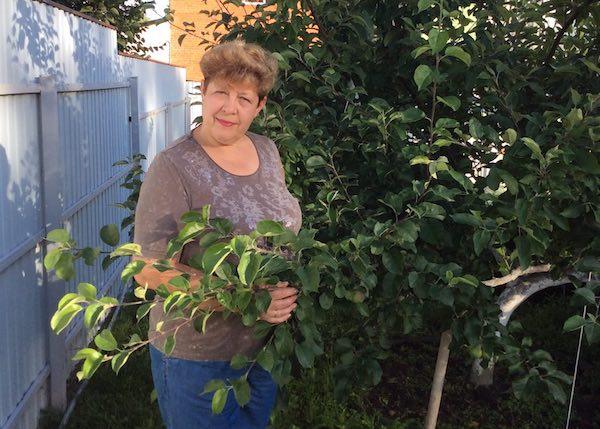 12 сортов яблонь на одном дереве привито в саду Ольги Куц из Подмосковья