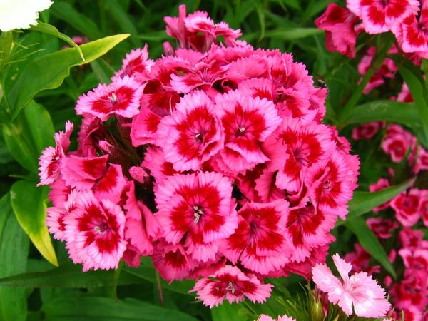 10 растений, цветущих в июне