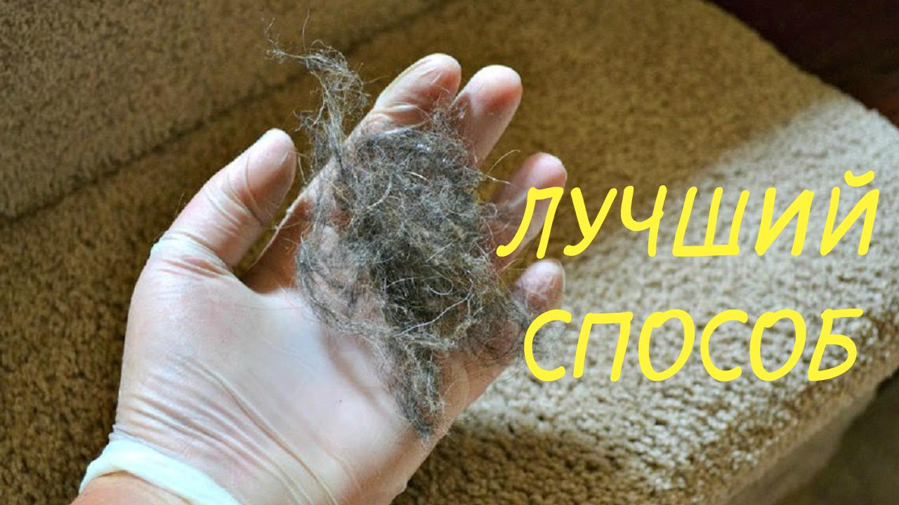 Как быстро убрать шерсть животных с ковра или дивана/СПОСОБ работает на 100%