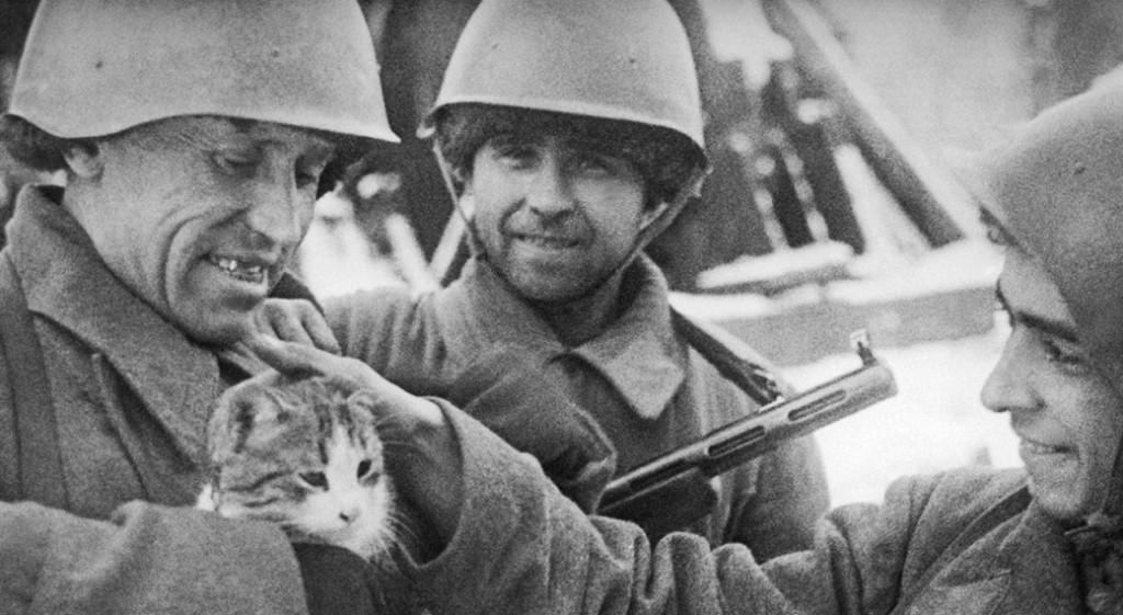 Коты и кошки во Второй мировой войне