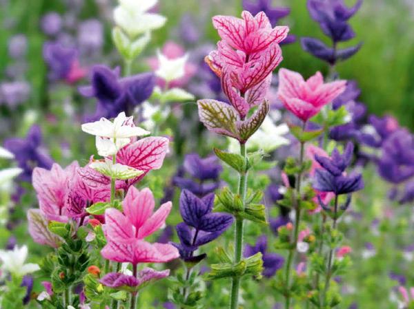 Этот цветок затмит всех в саду!