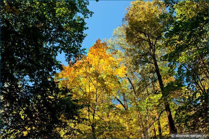 Деревья на склонах гор Подмосковья