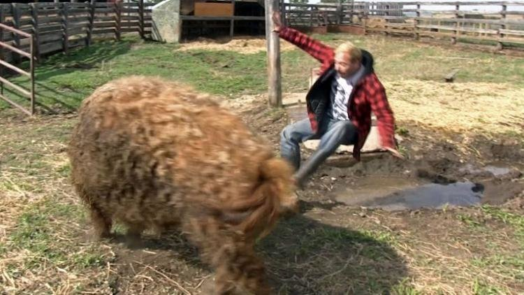 Кудрявая свинья метко отомстила наглецу, который решил на ней прокатиться в мире, забавно, люди, прокатился, свинья, юмор