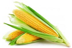Полезные свойства кукурузы