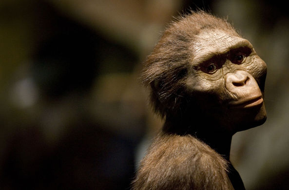 Первые предки людей были высокими и худыми около миллиона лет