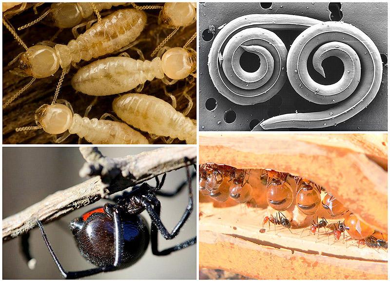 25 самых опасных насекомых в мире