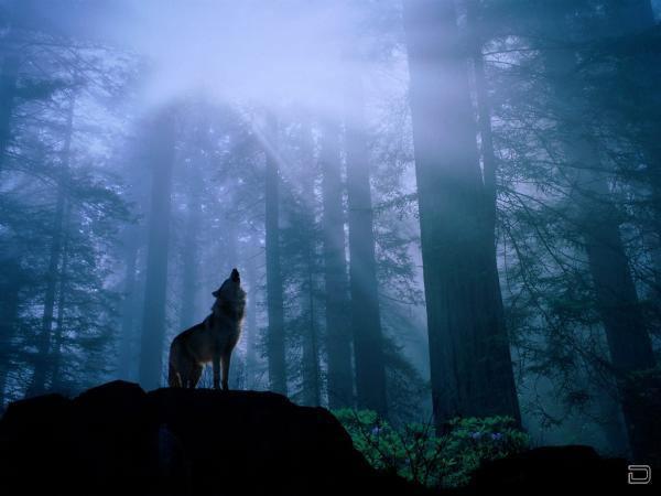 Волки самое интересное в блогах