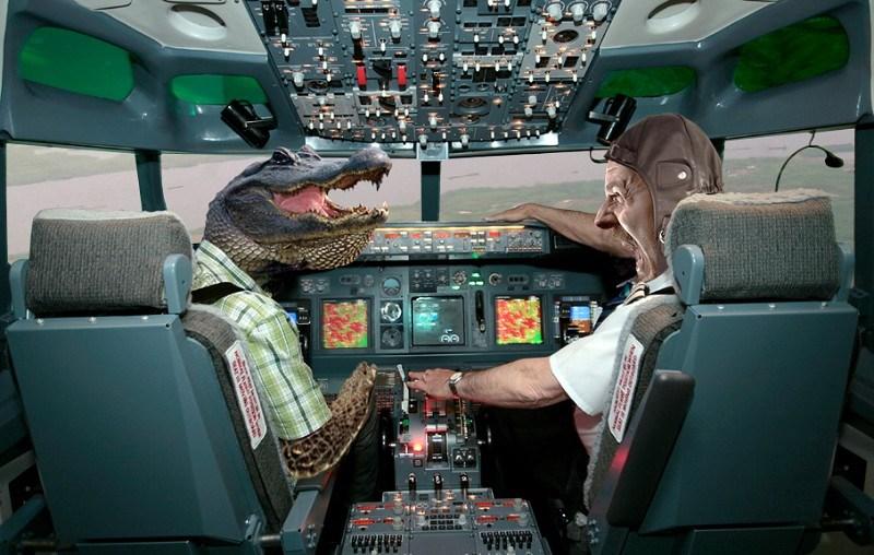 Террорист поневоле: как крокодил стал виновником крушения пассажирского самолета