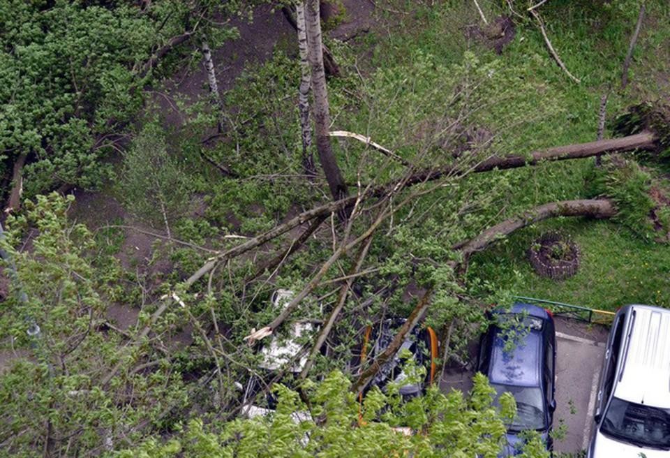 Стали известны подробности гибели людей во время урагана в Москве
